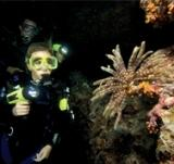 Scuba Cat Diving Phuket Thailand Learn to Dive