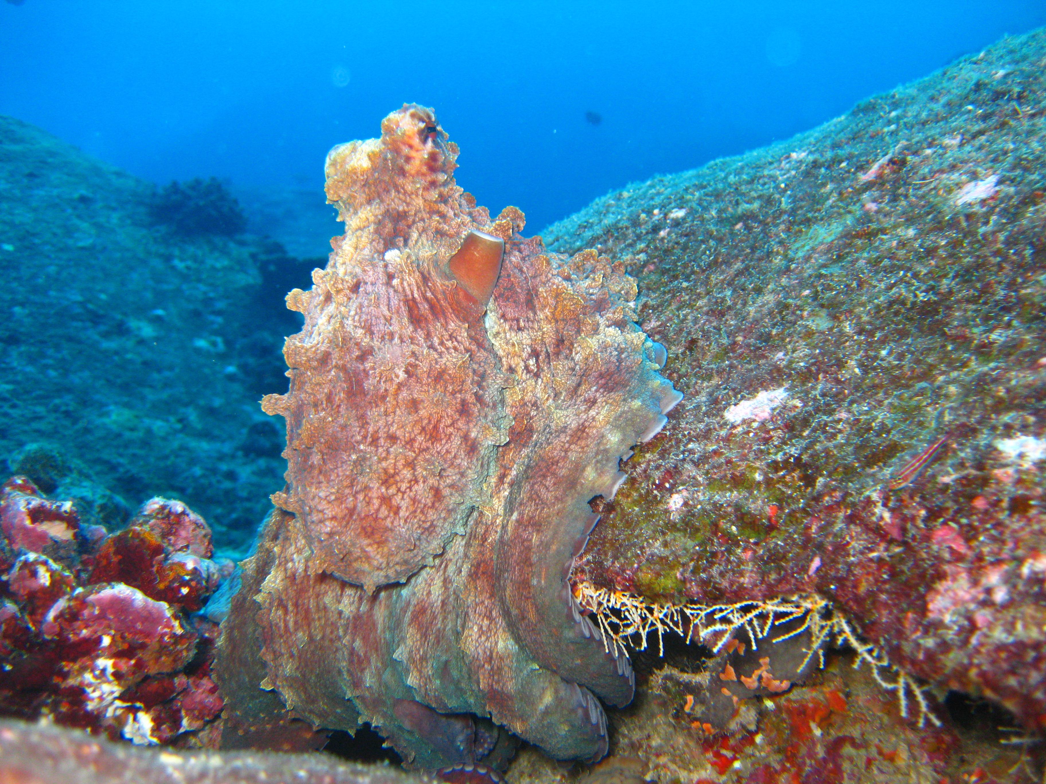 Scuba Cat Diving Phuket Thailand  5 * CDC