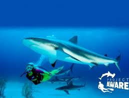 Scuba Cat Diving Phuket Thailand 100% Aware