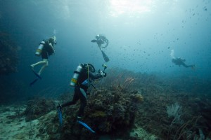 Scuba Cat Diving Phuket Thailand Buoyancy Contro