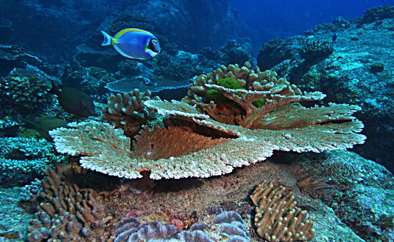 Scuba Cat Diving Phuket Thailand Responsible Diver